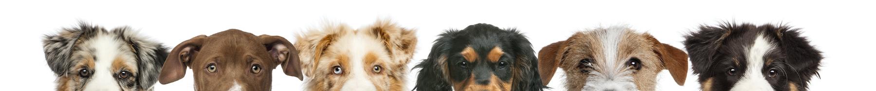 Kelynse prodotti cosmetici per cani italia