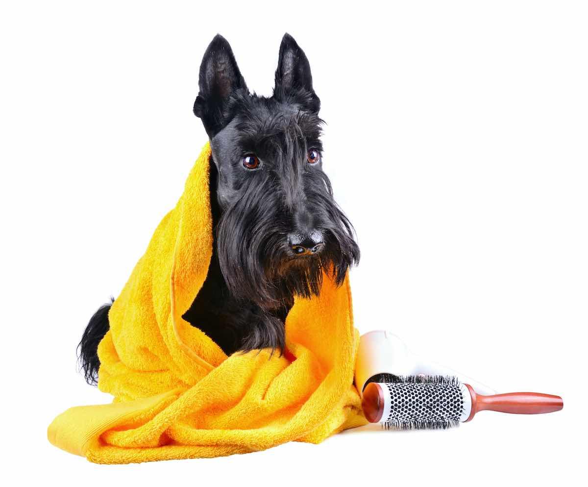 Prodotti Cosmetici per Cani shampoo balsamo profumi